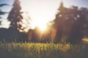 grass-455753_1280